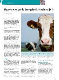 Waarom een goede droogstand zo belangrijk is - Melkveebedrijf
