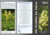 Orchidee des Jahres 2012 - AHO-Hessen