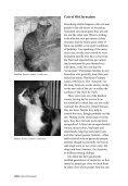 Cats of Jerusalem - Jerusalem Quarterly - Page 6