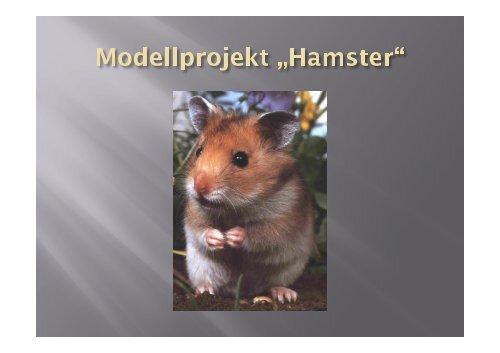 "Projekt ""Hamster"" - Schiller Gymnasium - Gartenstadt Drewitz"
