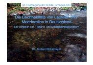 Die Laichhabitate von Lachsen und Meerforellen in ... - Wanderfische