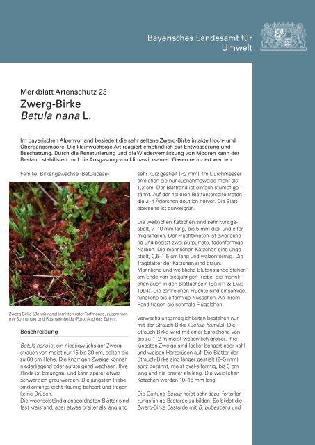 Merkblatt Artenschutz 23 - des Bayerischen Landesamt für Umwelt ...