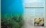 MARINE PLANTS - UAE Interact