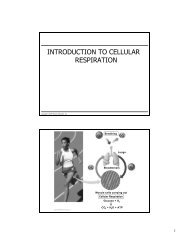 INTRODUCTION TO CELLULAR RESPIRATION - eweb.furman.edu