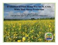 Evaluation of Sunn Hemp Hay for St. Croix White Hair ... - CEDAF