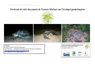 Protocole de suivi des pontes - Réseau des tortues marines de ...