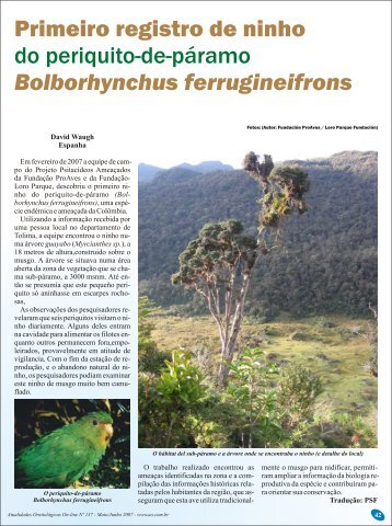 Bolborhynchus ferrugineifrons - Atualidades Ornitológicas