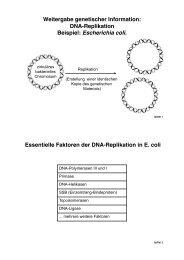 DNA-Replikation - ZMBH