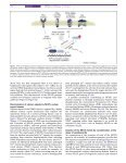 NFAT signaling and the invention of vertebrates - Graef Lab ... - Page 2