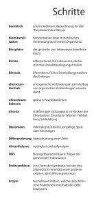 Glossar - Stiftung Drittes Millennium - Seite 3