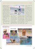 Agility-Klubsieger 2011 - Klub für Terrier e.V. - Seite 6