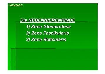 hormone!!! - Biochemie-trainings-camp.de