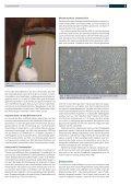 Regenerative Therapie - möglichkeiten beim Pferd - Pferdeklinik ... - Page 3