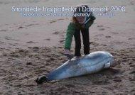 Strandede havpattedyr i Danmark 2008 - Fiskeri- og Søfartsmuseet