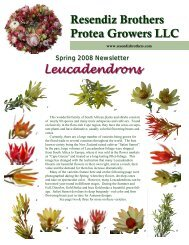 Spring 2008 - Resendiz Brothers Protea Growers