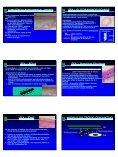 Tecido Conjuntivo Tecido Conjuntivo Tecido Conjuntivo - Fibras - CCS - Page 3