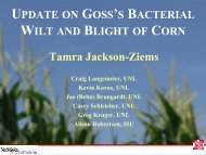 Update on Goss's Bacterial Wilt and Blight of Corn