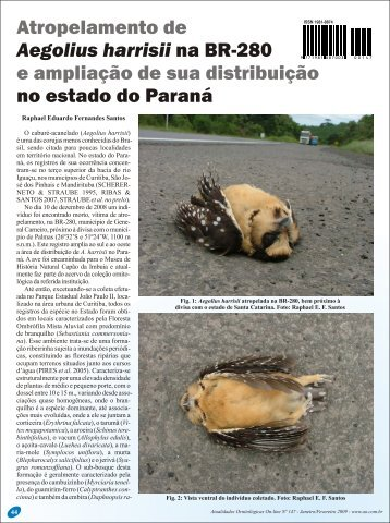 Download - Birding Brazil Tours