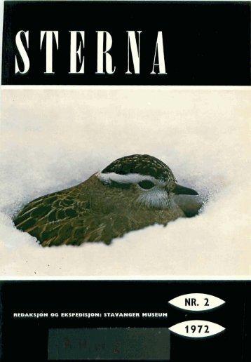 Sterna, bind 11 nr 2 (PDF-fil) - Museum Stavanger