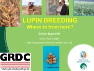 Lupin Breeding – Where to From Here? - Lupins.org