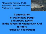 Creation of the first river reserve for Parahucho perryi in Russia, and ...