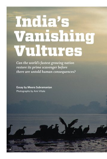 India's Vanishing Vultures