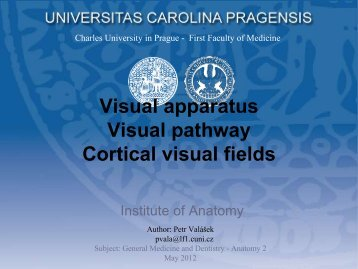 Visual apparatus Visual pathway Cortical visual fields