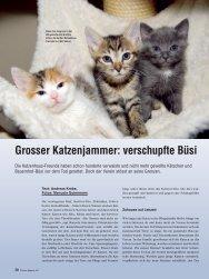 Grosser Katzenjammer: verschupfte Büsi - Schweizerische ...