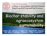 Biochar stability and agroecosystem sustainability - International ...