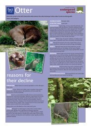 otter - People's Trust for Endangered Species
