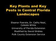 A1 Azalea (title/healthy plant) - University of Florida