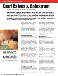 Beef Calves & Colostrum - Red Angus Association of America