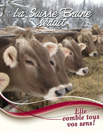 Brochure Suisse Brune - Canadian Brown Swiss & Braunvieh ...