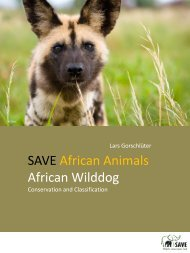 African Wilddog - SAVE Wildlife Conservation Fund