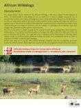 African Wilddog - SAVE Wildlife Conservation Fund - Page 3