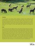 African Wilddog - SAVE Wildlife Conservation Fund - Page 4