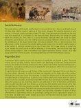 African Wilddog - SAVE Wildlife Conservation Fund - Page 5