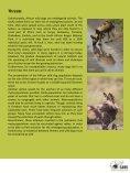 African Wilddog - SAVE Wildlife Conservation Fund - Page 6