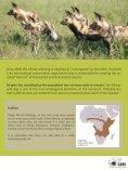 African Wilddog - SAVE Wildlife Conservation Fund - Page 7