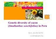 Genetic diversity of yacon