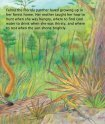 A Florida Panther Story - Sylvan Dell Publishing - Page 5