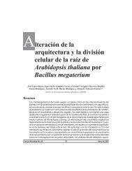 Alteración de la arquitectura y la división celular de la raíz de ...