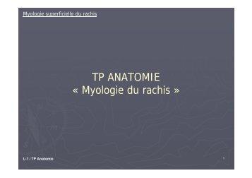 TP ANATOMIE « Myologie du rachis »