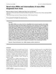 Novel micro-RNAs and intermediates of micro-RNA biogenesis from ...