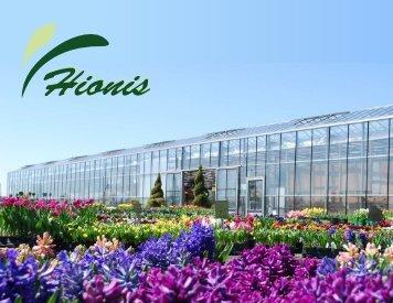 Top Size Bulbs - Hionis Greenhouses