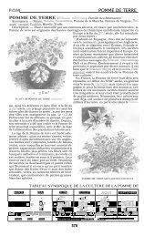 Pomme de terre - Réseau Semences Paysannes
