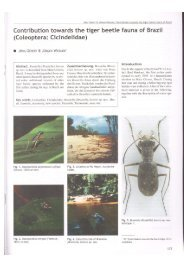 Contribution towards the tiger beetle fauna of Brazil (Coleoptera ...