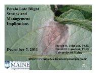 Potato Late Blight Strains and Management ... - University of Maine