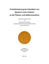 Charakterisierung der Interaktion von Nesprin-2 ... - Universität zu Köln