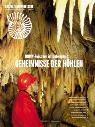 Sommer 2005 - Naturhistorisches Museum Wien